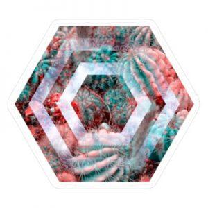 Кактус - Шестиугольник