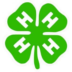четыри листка зелень